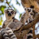 Mille et une raisons de visiter Madagascar